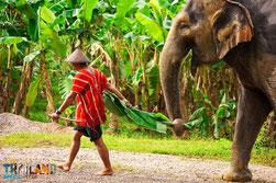 Bewusstes Reisen: Nachhaltiger Tourismus in Thailand.