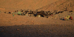 Ein Nomadenzelt - Une tente de nomades