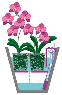 arrosage orchidée connecté avec OriCine