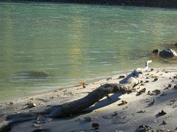 Sandbank am Fluss