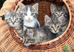 Katzenbetreuung, Katzensitter, Tierbetreuung, Katzenpension, Bochum