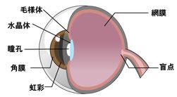 視力障害、眼精疲労