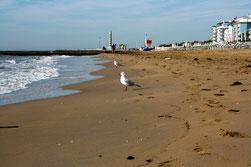 15  Möwen/Sea gull