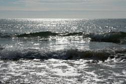31 Reflexionen im Wasser/Reflctions in the water