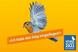 Das Rotkehlchen ist Vogel des Jahres 2021. - Foto: getty images/Simone Mazzocoli