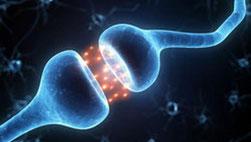 нейрон, синапс