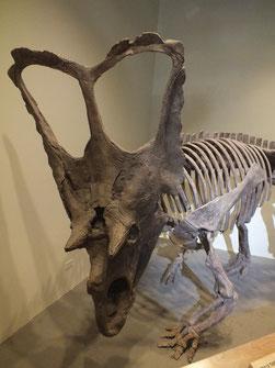 Quelle: Centrosaurus / Patrick Klapetz