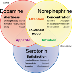 importance de la sérotonine et des médiateurs chimiques dans la prise de poids et l'équilibre psychique.