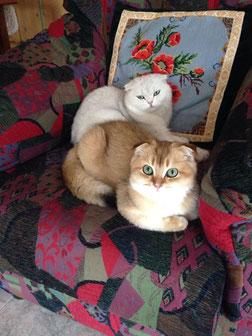 Diva & Kenzo dei Pelosetti