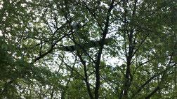 Dans un arbre perché