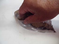アオリイカのエンペラを取り外す写真