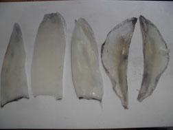アオリイカの刺身を作る写真