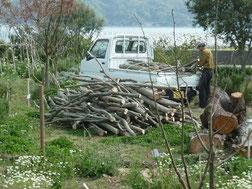 伐採した雑木を運搬