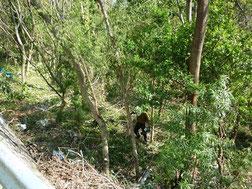 裏山で雑木の伐採作業