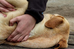 reportage ostheopathe animalier
