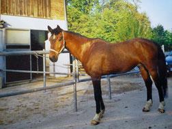 Sehr schwerfüttriges Pferd-nach 2 Jahren erste Ansätze von Muskeln und Rundungen