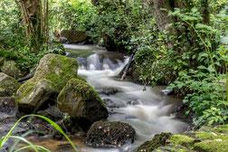 Le ruisseau de Vienne à Sainte Croix sur Orne - Pierre Loridon
