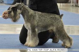 FIL VAN TIP-TOP ALFA ROMEO - CAC, res. CACIB