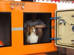 津波シェルターをワンちゃんが避難体験