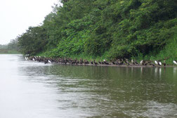 Viaje en lancha humedales Cano Negro