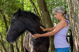 Soins BioKinésiologie® animalière à Agen (47- Lot et Garonne)