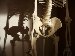 Skelett mit Schatten