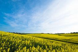 landwirtschaftliche fläche osteuropa