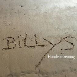 Billys Hundebetreuung Gassiservice Bergedorf Katzenversorgung