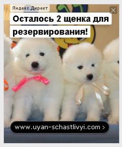 Пример ремаркетинговой рекламы щенков в Яндекс Директ