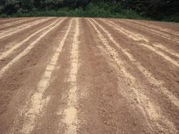 種まきが終わり、雨を待つ畑