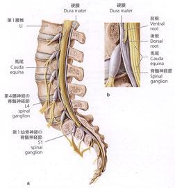 脊柱管狭窄症 整体