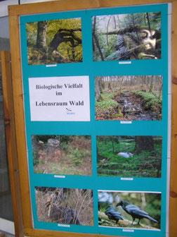 """Eine Tafel zum Thema Lebensraum Wald aus der Ausstellung """"Biologische Vielfalt"""""""