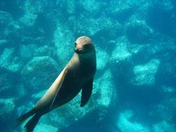 Galapagos Kreuzfahrten mit ECUADORline