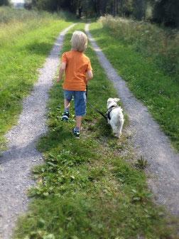 Diabetikerwarnhund, zertifizierte Hundeschule, Helfende Pfote, Assistenzhundezentrum, beste Hundetrainer in Vorarlberg, Vorarlberger Hundeschule