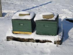 Zwei Bienenkästen stehen im Schnee. Für die Weihnachtsmärkte 2014 erhoffen wir uns eben so viel Schnee. Die Bienen haben dieses Jahr viel Honig produziert. Die Imkerei Ökohof Fläming wird diesen entsprechend auch zu Weihnachten verkaufen.