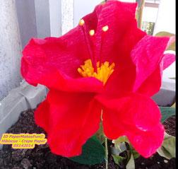 Hibiscus - Crepe Paper