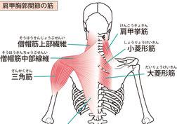 肩こり ・肩甲骨内側痛・四十肩
