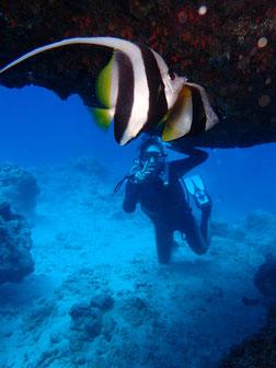 石垣島でのんびりダイビング「ハタタテダイと私」