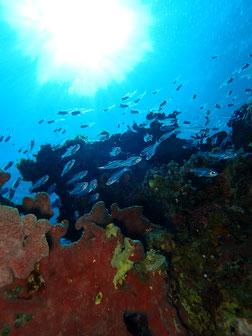 石垣島でのんびりダイビング「ボートは南へ」ヒートハートクラブ