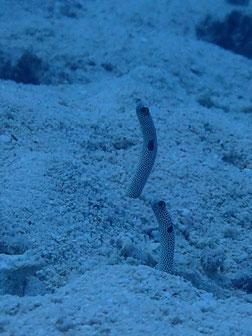 石垣島でのんびりダイビング「水槽の中」ヒートハートクラブ