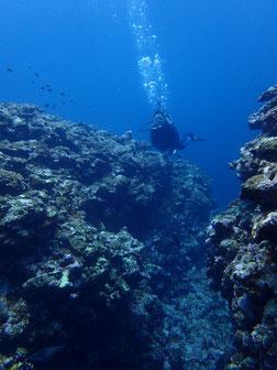 石垣島でのんびりダイビング「NOマンタ」ヒートハートクラブ