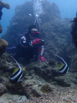 石垣島でのんびりダイビング「ハタタテダイ」