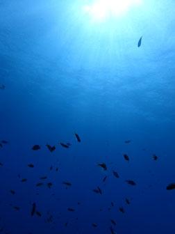 石垣島でのんびりダイビング「程よい流れに身を任せ」