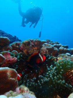 石垣島でのんびりダイビング「ダイバー」