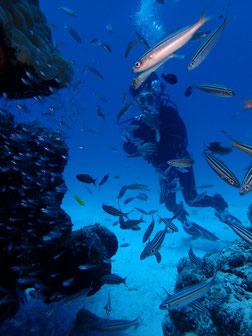 石垣島でのんびりダイビング「光とコラボ」ヒートハートクラブ