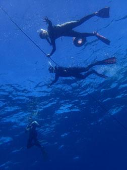 石垣島でのんびりダイビング「ケーブ」ヒートハートクラブ