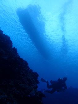 石垣島でのんびりダイビング「ドロップオフから」