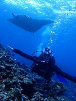 石垣島でのんびりダイビング「マンタまつり」ヒートハートクラブ