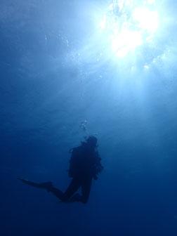 石垣島でのんびりダイビング「リベンジ」ヒートハートクラブ