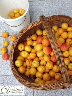 Aprikosen / Marillen haben wertvolle Inhaltstoffe für Ihre Gesundheit. Mehr davon sowie ein einfaches Marillenkuchen Rezept auf daninas-kunst-werkstatt.at